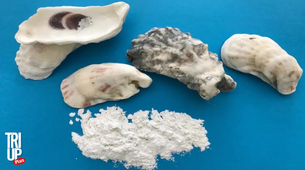 Bột vỏ sò tăng trưởng chiều cao - Triup